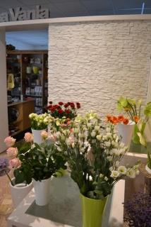 new negozio
